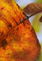 Fall plant leaf