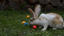 a bunny inspecting Easter eggs