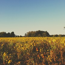 sun shining on a field of dying wild flowers