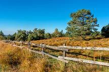 Black forest in autumn and fence line