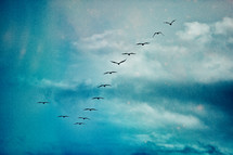 flock of geese forming a V