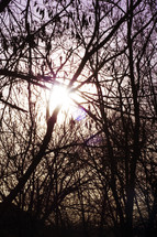 sun glowing through winter tree branches