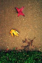 fall leaves on a sidewalk