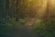 sunlight on a forest path