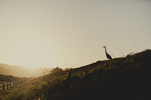 Egret on a roadside hill at sunrise.