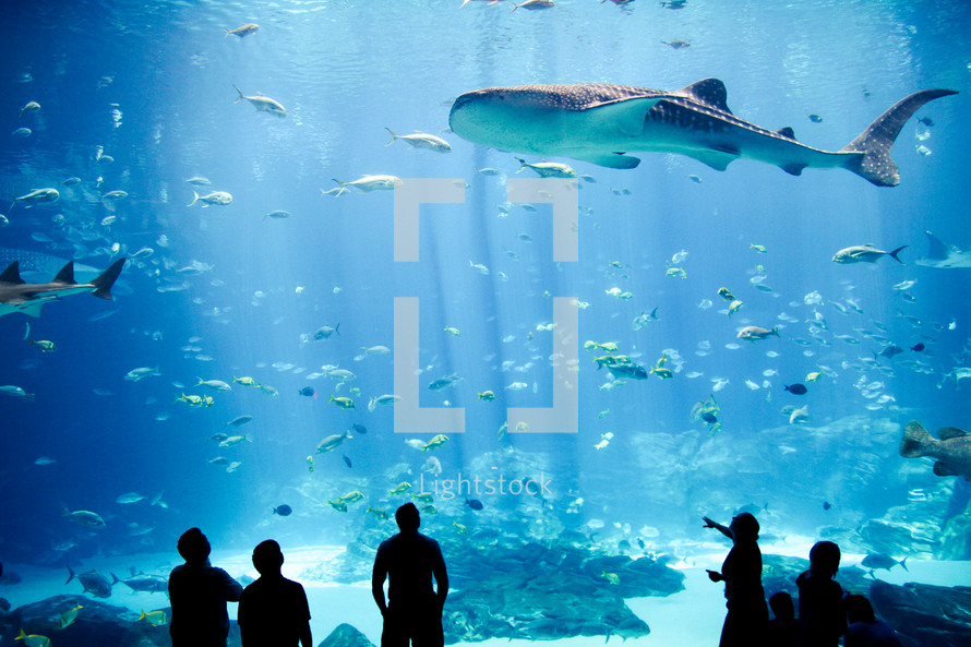 silhouettes of people watching a shark in an aquarium