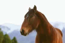 A brown horse.