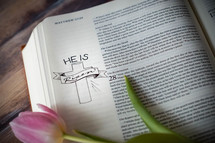 pink spring tulip on the pages of a Bible
