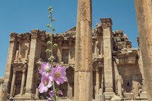 pink flowers and ancient building ruins