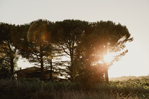 bright sunlight over trees in Italy