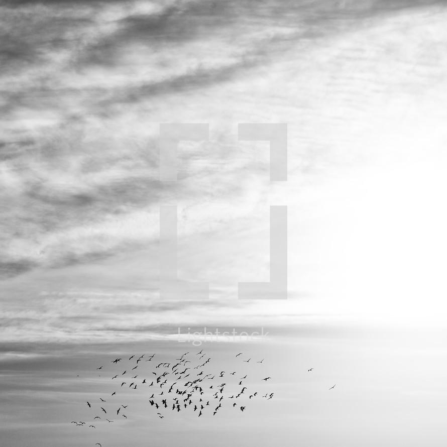 flocks of birds in the sky