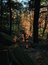a person with their dog hiking in a fall forest