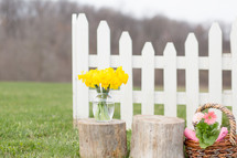 daffodils in a vase on a tree stump outdoors