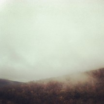 clouds in a mountaintop forest