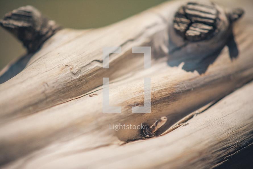 Knots on a tree limb.