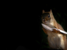 a squirrel holding a spoon