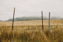 Barbed wire fence in a pasture with fog.