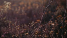Flower field during sunset - Golden Hour - Camera Movement - Light
