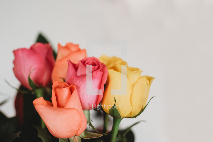 yellow, pink, and orange roses