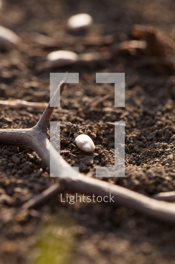 seed and thorns in the soil