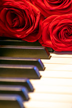 roses on a piano