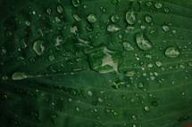 dew on a green leaf
