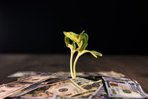 Plant with money around it.