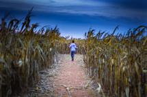 a child exploring a corn maze