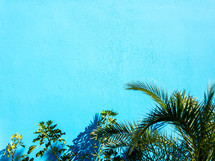 tropical plants against a turquoise background
