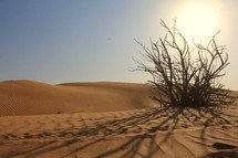 Dry bush in desert sand