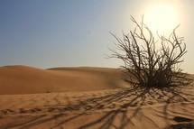 Dry bush in desert sand