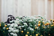 flowers in a backyard