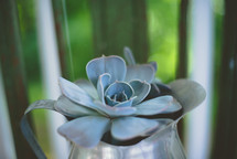 succulent plant in a silver pitcher