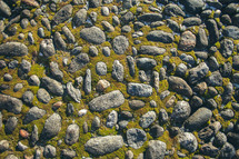 moss and stones background