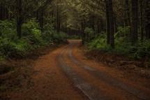 worn path through a forest