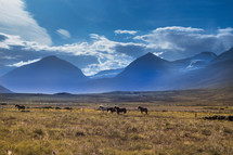 horses in a pasture and mountain view