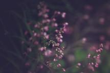 tiny pink flowers