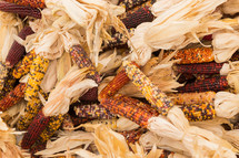 dried fall corn