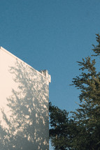 white exterior wall and tree branches