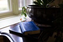 Bible and house plant on a table in front of a window
