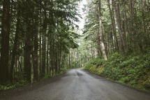 road through a thick forest