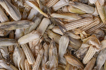 A pile of dried ears of corn.
