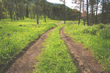 A worn down mountain dirt road amongst a beautiful scene of trees, grass, and flowers.