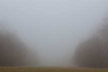 foggy morning in a field