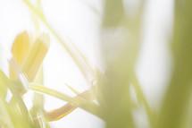 intense sunlight on grass