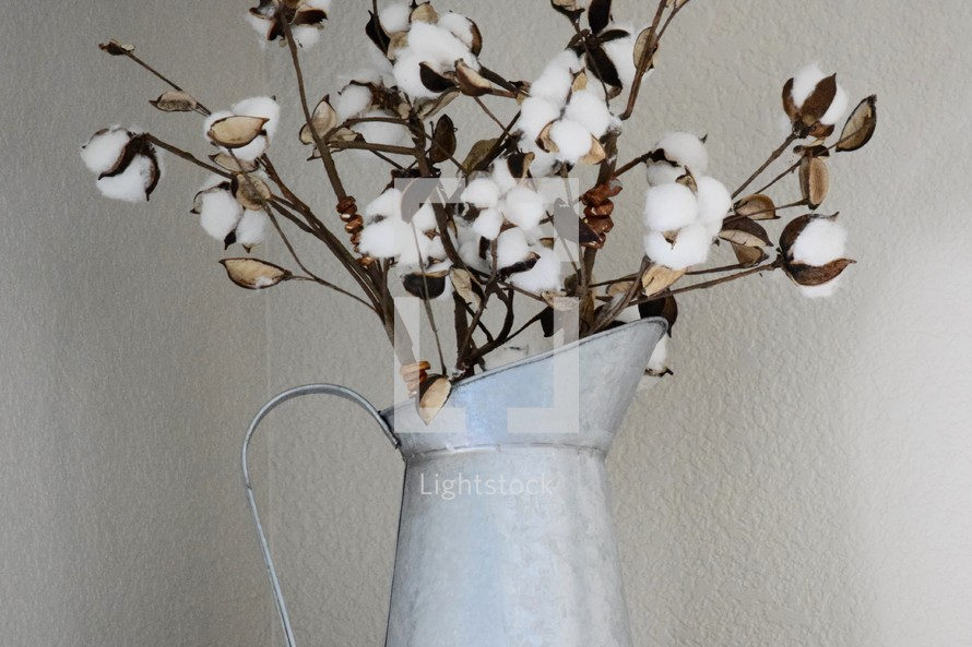 cotton plant in a galvanized pitcher