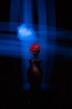rose in a vase under blue light