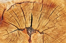 cracked tree stump