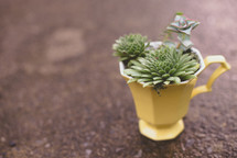 succulent plants in a mug on the ground
