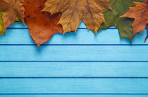 fall leaves on blue wood background